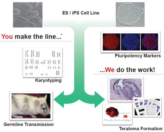 ES/iPS Cell Services - iPSC Characterization